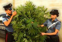 Cannabis, è ora di piantarla.