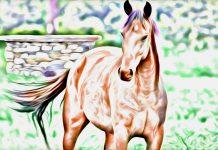 La lezione del cavallo