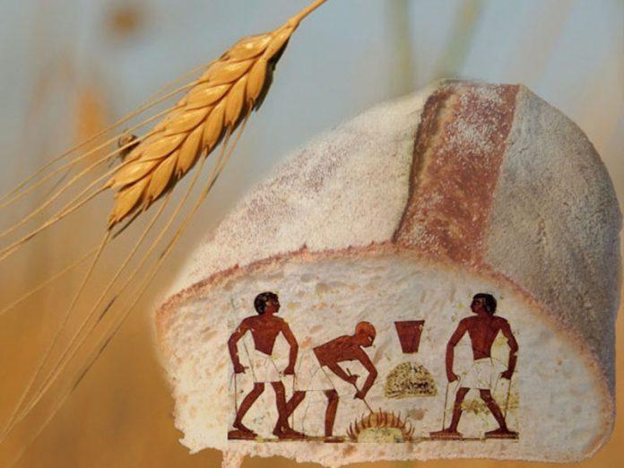 Culinary Stories: Spelt bread