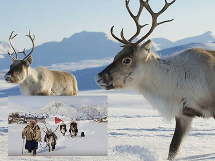 Il popolo in simbiosi con le renne