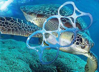 Le tartarughe e gli anelli in plastica