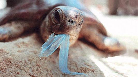 Le tartarughe e la plastica