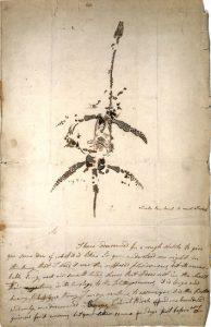 Mary Anning, disegno di uno dei fossili