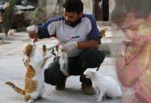 Mohammad, gattaro di Aleppo