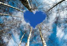 La betulla, il simbolo degli amanti