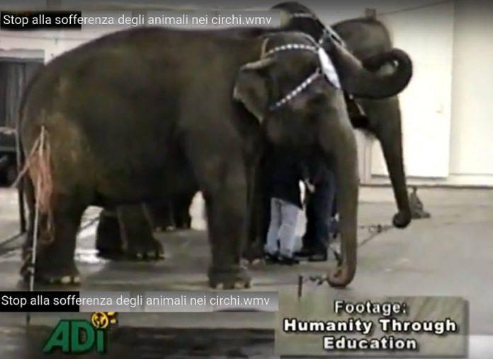 No al circo con animali.