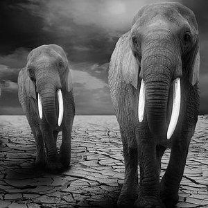 L'elefante è destinato all'estinzione?