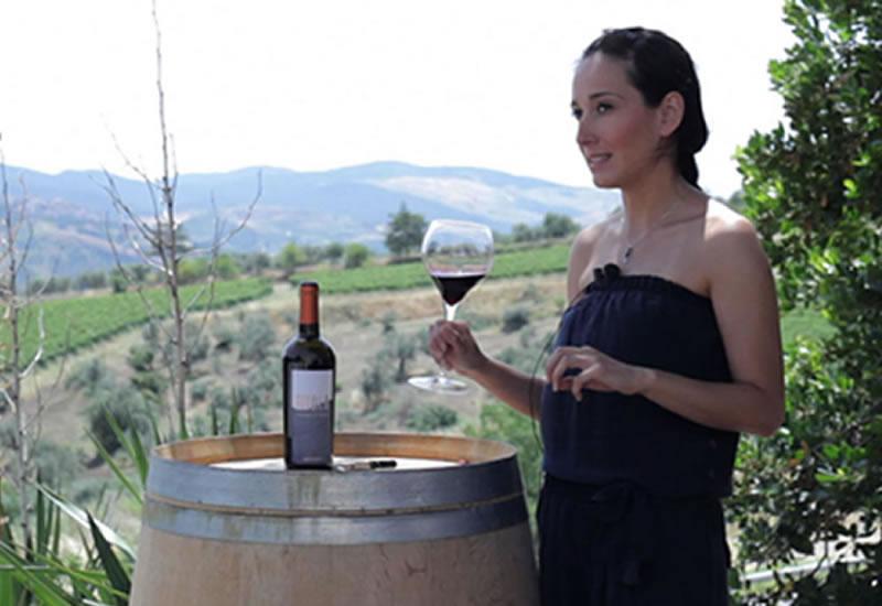 TITOLO storia di un vino di successo Elena Fucci
