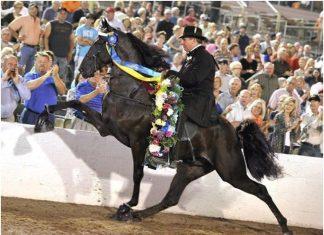 Il Soring, i cavalli americani
