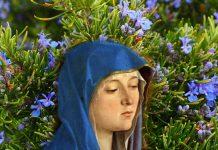 Il rosmarino, sui cui rami asciugò il manto di Maria