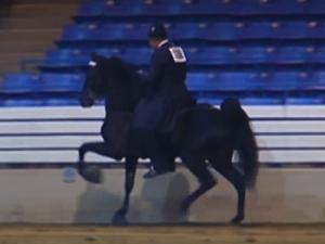 La pratica del Soring sui cavalli serve per costringere al movimento nell'immagine