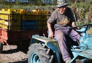 Nonno Generoso nelle vigne del TITOLO