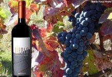 TITOLO, un vino in sintonia con la natura