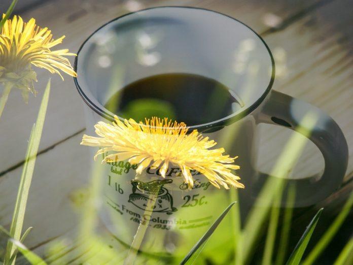 Il caffè di tarassaco e le sue proprietà