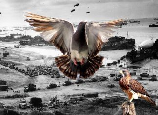 Paddy il piccione e lo sbarco in Normandia