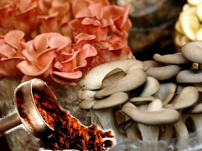 Coltivare funghi commestibili in casa con i fondi di caffè