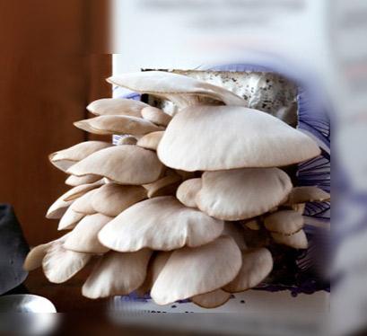Funghi coltivati in casa: contenitore