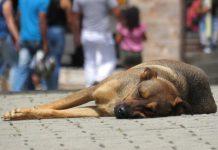 Come Olanda e Italia gestiscono i cani randagi