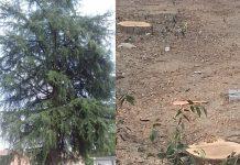 Salvare un albero in città