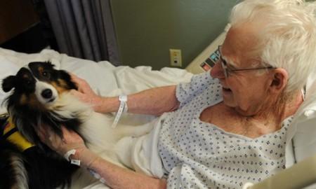 Case di cura e cani