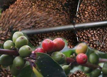 lavorazione delle drupe produzione