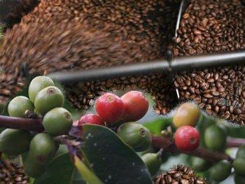 Produzione del caffè