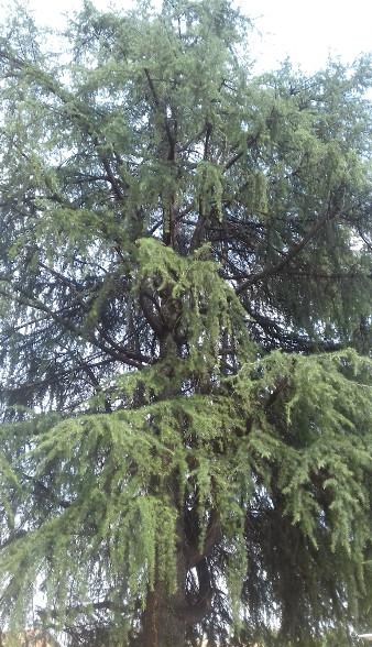 Tagliati quattro alberi in città e integrazione