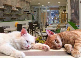 Gattini da accarezzare mentre prendi un caffè?