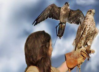L'Aquila e il Falco in Italia