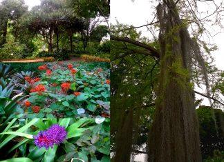 Il Giardino Botanico di Puerto de la Cruz: la scienza e nell'incanto di una foresta tropicale