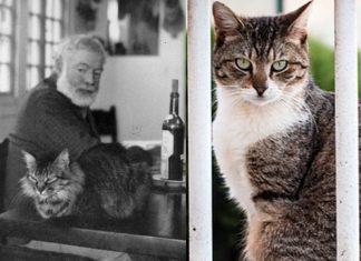 Hemingway e i Gatti