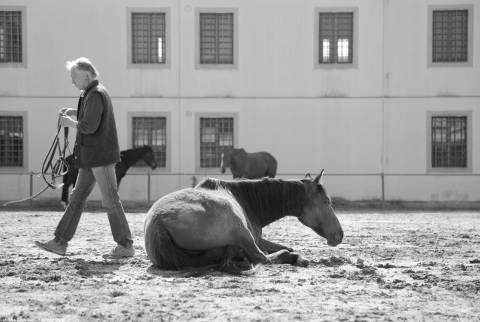 Carcere di Bollate e ASOM e cavalli