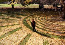 Joanna Hedrick e Fallen Ginkgo Art, disegnare con le foglie