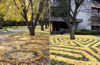 Joanna Hedrick disegnare con le foglie gialle