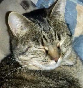Il ron ron del gatto: quando fa le fusa