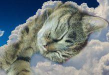 Il ron ron del gatto: una terapia magica