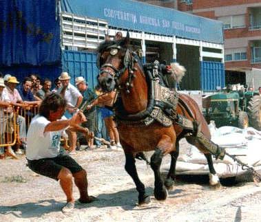 Tradizioni in Spagna Tira Arrastre