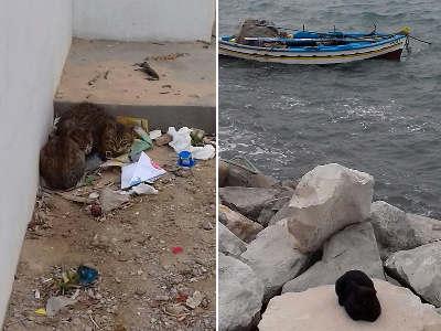 Tunisia gatti nella medina