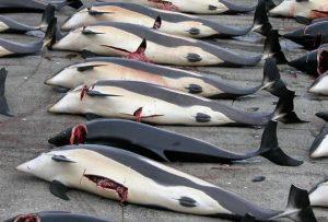 Caccia alle balene, Giappone
