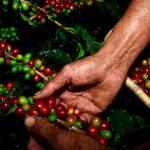caffè nelle mani di chi lo lavora