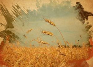Rifiuti e grano sicuro