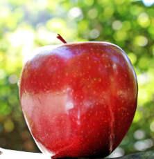 Il melo dai frutti prodigiosi 3 mela