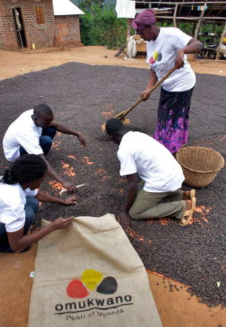 Lavorazione per Omukwano di Caffè River in Uganda