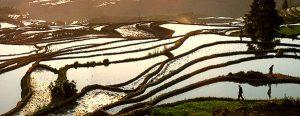 Le terrazze di riso di Yuanyang 3
