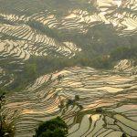 Le terrazze di riso di Yuanyang 7