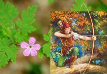 Il geranio di Robin Hood