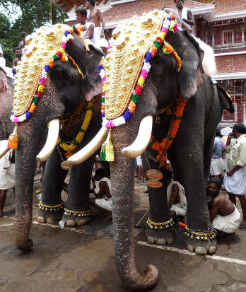 Elefanti in India addobbati
