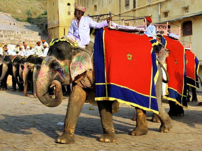 I Maltrattamenti degli Elefanti in India