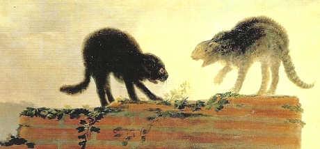 Gatti nell'arte: di Francisco de Goya, Due gatti che litigano