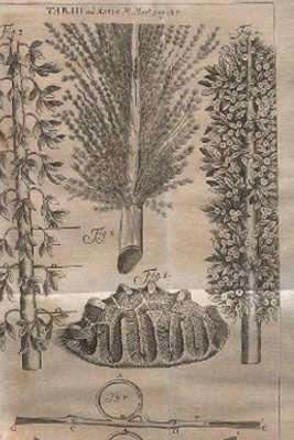 Hans Sloane disegni da libro